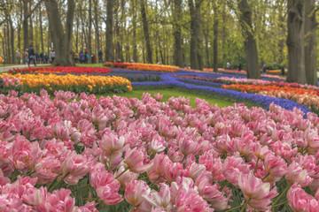 Blooming flowers in park