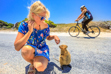 Friendly Quokka sniffing girl hand on street in Rottnest Island, near Perth in Western Australia. Smiling woman interacts with a Quokka, icon of island. An unrecognizable cyclist on blurred background