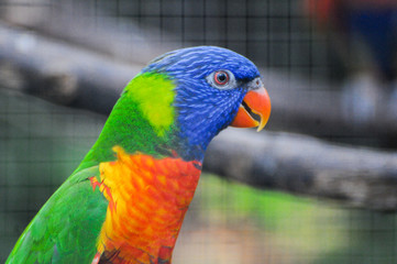 Beautiful blue and yellow Macaw sitting on cage.