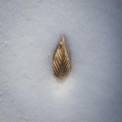 Golden Birch Leaf in the Snow