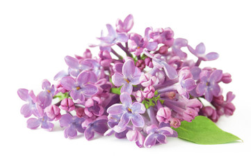 Spoed Foto op Canvas Lilac lilac flowers isolated on white background