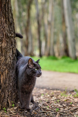 black cat in a forest
