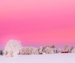 Poster Candy pink sunset in winterwonderland