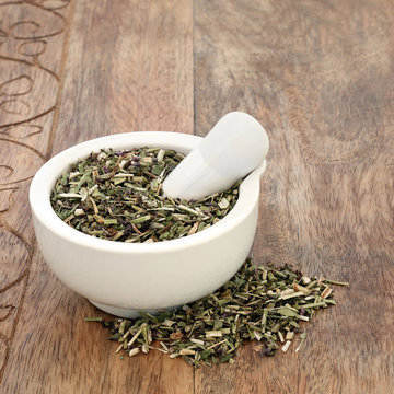Wood betony herb used in alternative herbal medicine to treat migraines, anxiety, sleeping disorders and toothache and has many other uses to improve health conditions. Stachy officinalis.