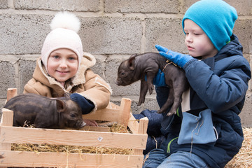 Adorable little childs in colorful clothers playing with just born piglets in winter fermers yard. Creative leisure with kids on swine farm