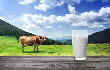 Glass of milk against mountain pasture with cow