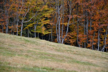 Colourful autumn trees on the hill