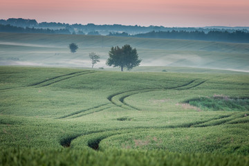 Dawn at foggy green field in summer, Europe