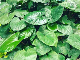 Green garden plant leaf background