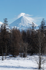 Wintry volcano landscape of Kamchatka Peninsula: view of cone of eruption active Klyuchevskoy Volcano and scenery winter forest. Russian Far East, Kamchatka Region, Klyuchevskaya Group of Volcanoes.