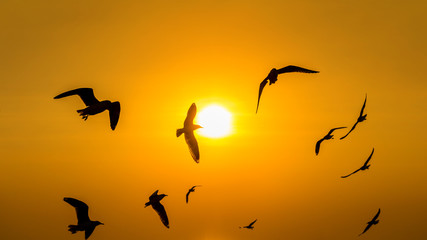 Sunset with silhoutte of birds flying.