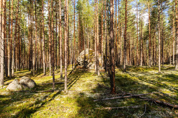 rocks in forest