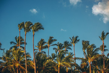 Palm trees at tropical coast landscape