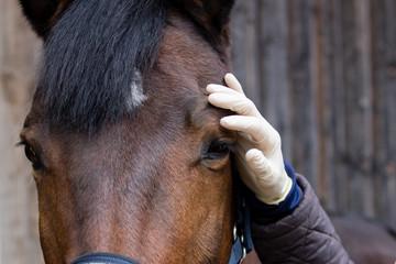 treatment horse eye