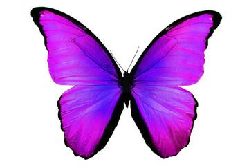 бабочка фиолетового цвета изолировано на белом