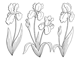 Iris flower graphic black white isolated sketch illustration set vector