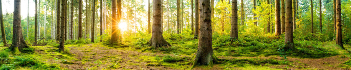 Papiers peints Forets Panorama of a beautiful forest at sunrise
