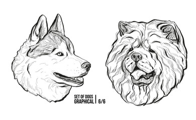 Set of portraits of dogs. Breeds Husky and Chow Chow. Graphical vector illustration