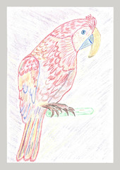 Pencil drawing African parrot