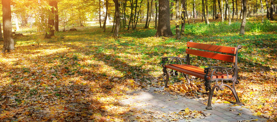 Beautiful autumn park with paths and bench. Wide photo.