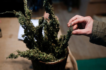 A visitor touches a cannabis bud during the 1st International Cannabis Expo, in Athens