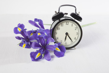the Violet Irises xiphium (Bulbous iris, sibirica) with clock on white background with space for text. Top view, flat . Holiday greeting card for Valentine's Day, Woman's Day, Mother's Day, Easter!