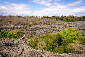 View of Ankarana Special Reserve  tsingy plateau,  Ankarana, Madagascar