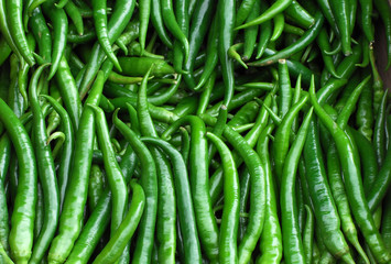 Fresh green pepper pile in harvest season