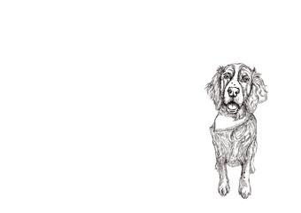 Hand drawn dog