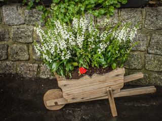 White flowers with red heart. Valentines day in garden concept.