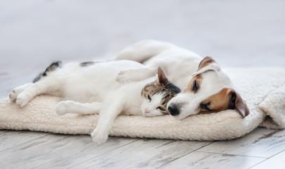 Kot i pies śpi