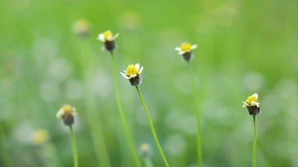 Fototapete - Video blur beautiful yellow flower landscape natural outdoor background Flower Grass blur Fresh green grass (shallow DoF) Natural green plants landscape using as a background or wallpaper