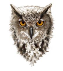 Fotobehang Uilen cartoon angry owl with ears and yellow eyes, feathers