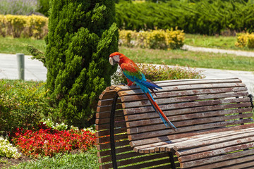 Parrot ara sitting on a bench against a background of vegetation, Georgia, Tbilisi. Parrot ara sitting on the bench.