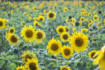 Sommerblumen im Spätsommer