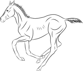 A sketch of a freely cantering foal.