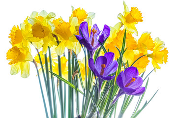 Bouquet of daffodils and crocuses on a white background