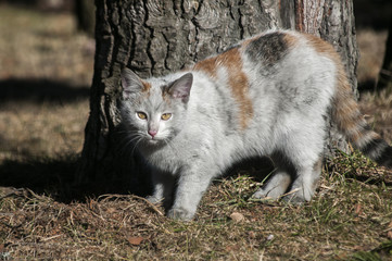 Dirty  female homeless street cat closeup near tree trunk in a park outdoors in sunny winter day