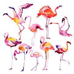 Tuinposter Flamingo Beautiful watercolor flamingos, isolated on a white. Big set.