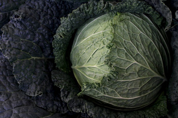Farmer's Market Cabbage