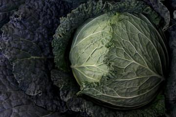 Farmer's Market Cabbage