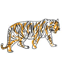 vector, isolated sketch tiger orange