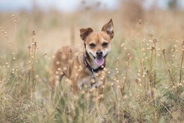 Small dog in field