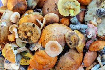 various edible mushrooms