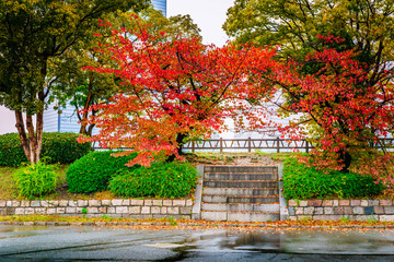 Landscape of garden in the autumn season, concrete stair at autumn park in Osaka, Japan. Alone and lonely concepts.