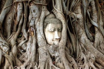 Ancient Buddha head in tree roots.