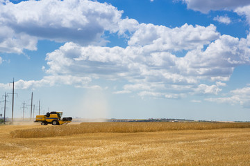 Foto auf Gartenposter Landschappen wheat field, harvesting, harvester mows wheat, yellow ripe ears