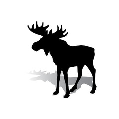 Silhouette of an elk with beautiful horns, a herbivore on a white background,