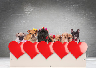 group of adorable dogs celebrating valentine's day