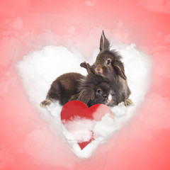 happy lionhead bunnies standing together on a love cloud